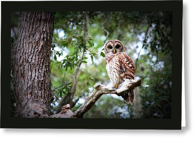Spotted Owl II Greeting Card