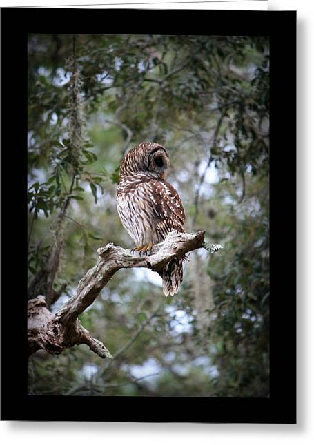 Spotted Owl Greeting Card