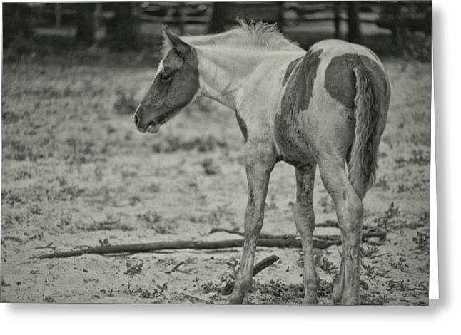 Greeting Card featuring the photograph Spotted Pony by Dressage Design