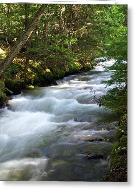 Sprague Creek Glacier National Park 2 Greeting Card by Marty Koch