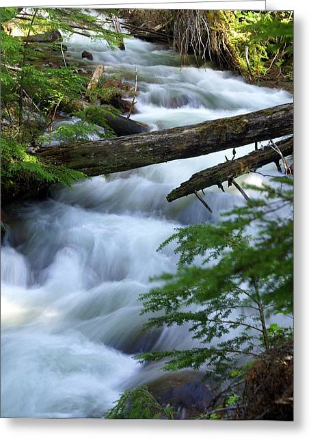 Sprague Creek Glacier National Park Greeting Card by Marty Koch