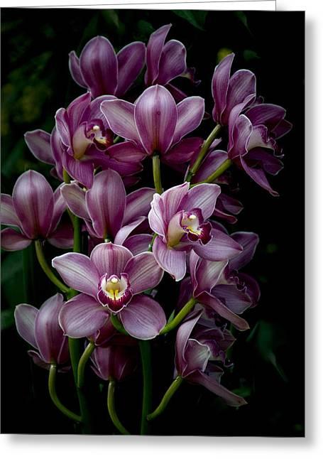 Spray Of Cymbidium Orchids Greeting Card