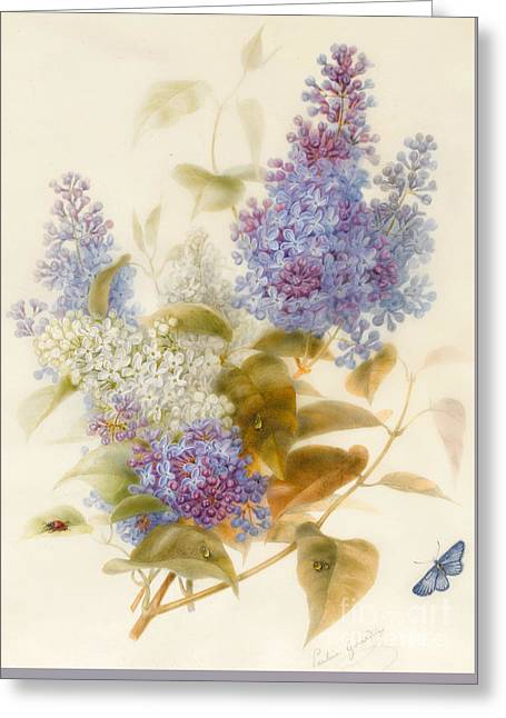 Spray Of Lilac Greeting Card by Pauline Gerardin