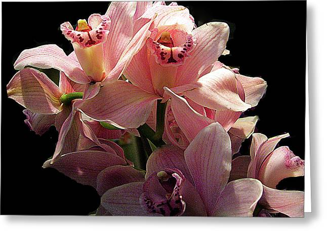 Spray Of Pink Orchids Greeting Card by Merton Allen