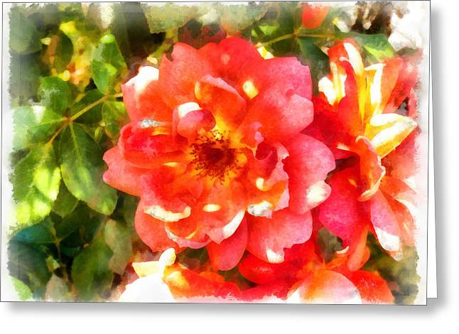 Spread Petals Of A Red Rose Greeting Card by Ashish Agarwal