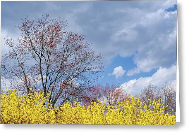 Greeting Card featuring the photograph Spring 2017 by Bill Wakeley
