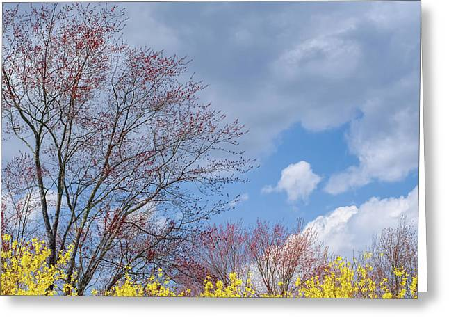 Greeting Card featuring the photograph Spring 2017 Square by Bill Wakeley