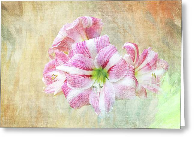 Springy Amaryllis Greeting Card