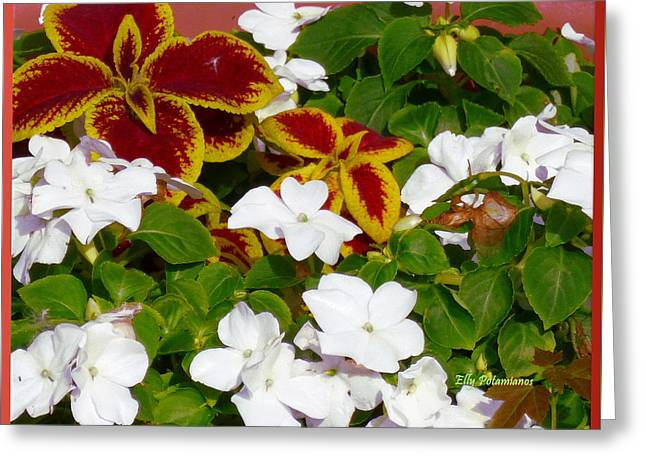 Spring Annuals Greeting Card