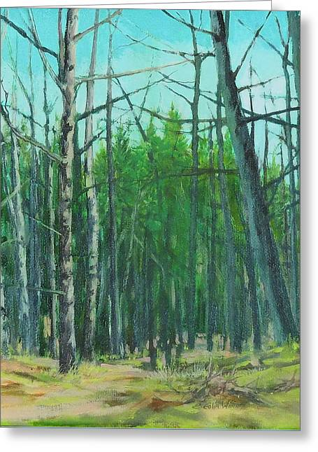 Spring Aspens Greeting Card