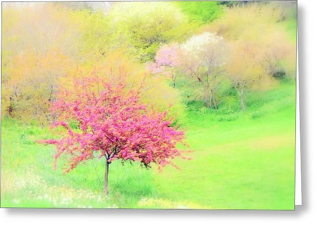 spring at Highland Park  Greeting Card