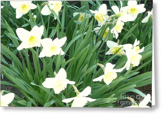 Spring At Last Greeting Card by Barb Montanye Meseroll
