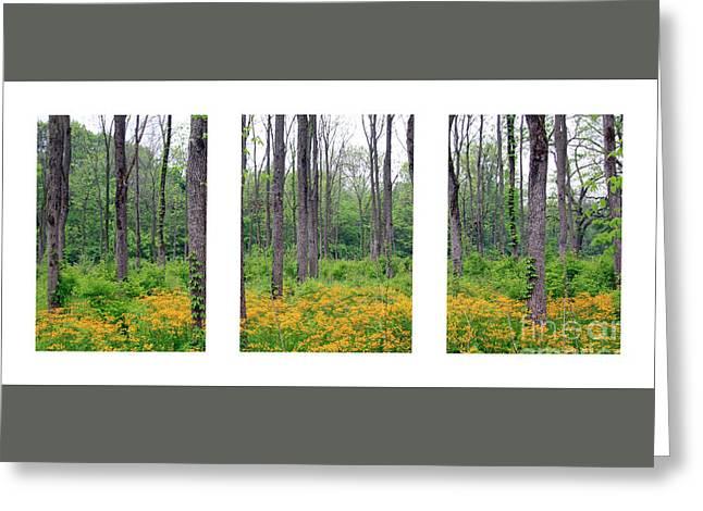 Spring At Walnut Plantation Greeting Card by Steve Gass