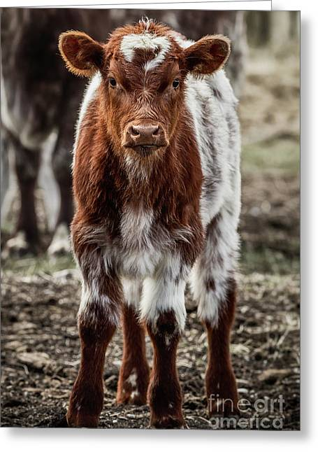 Greeting Card featuring the photograph Spring Baby by Brad Allen Fine Art