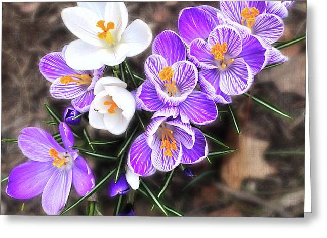 Spring Beauties Greeting Card