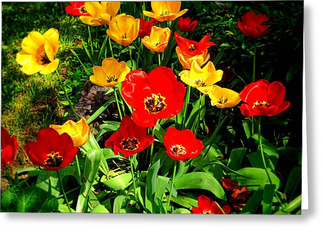 Spring Beauty Greeting Card by Olivier Le Queinec