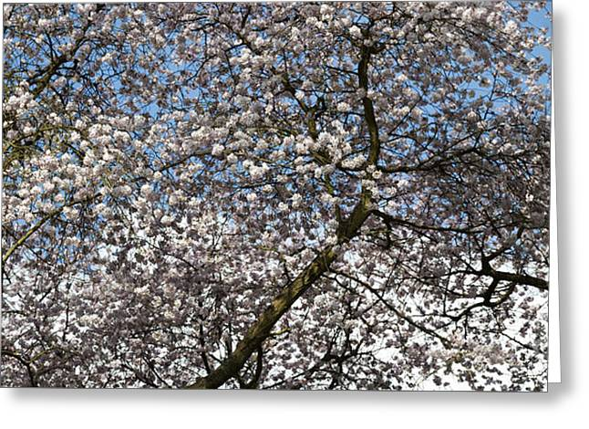 Spring Beauty Greeting Card by Tim Gainey