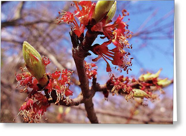 Spring Bloom #1 Greeting Card