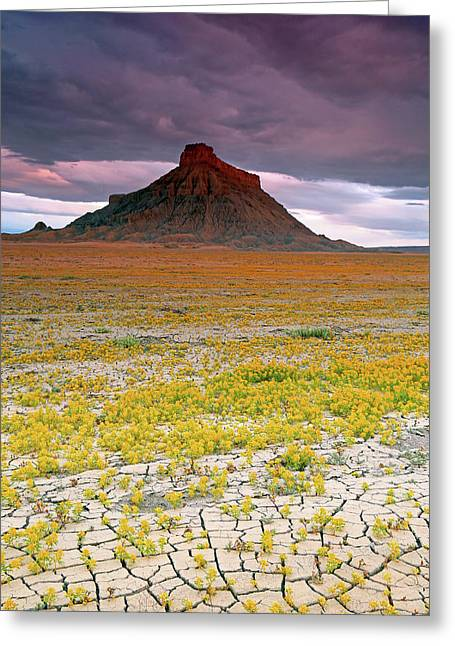 Greeting Card featuring the photograph Spring Bloom At Factory Butte. by Johnny Adolphson
