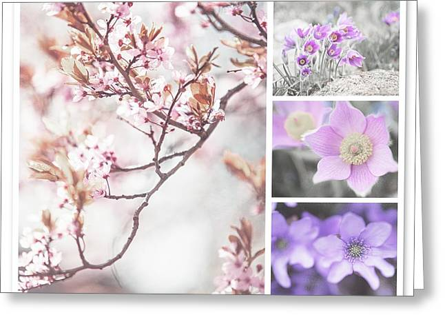 Greeting Card featuring the photograph Spring Bloom Collage 1. Shabby Chic Collection by Jenny Rainbow