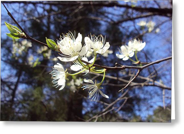 Spring Blooms Greeting Card by Jennifer Coleman