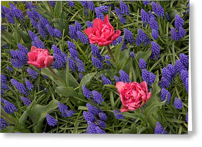 Greeting Card featuring the photograph Spring Blooms by Phyllis Peterson