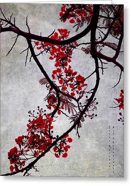 Spring Bloosom In Maldives. Flamboyant Tree II. Japanese Style Greeting Card