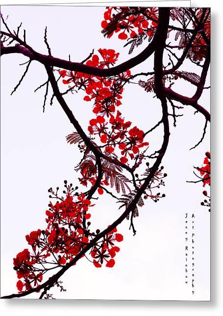 Spring Bloosom In Maldives. Flamboyant Tree Greeting Card by Jenny Rainbow