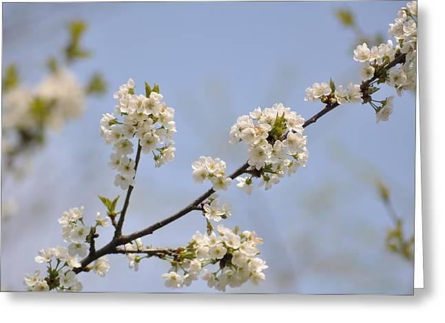Spring Blossom Greeting Card by Gwen Allen