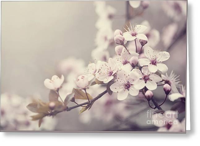 Spring Blossom Greeting Card by Jelena Jovanovic