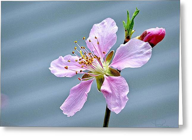 Spring Blossom Greeting Card by Ludwig Keck