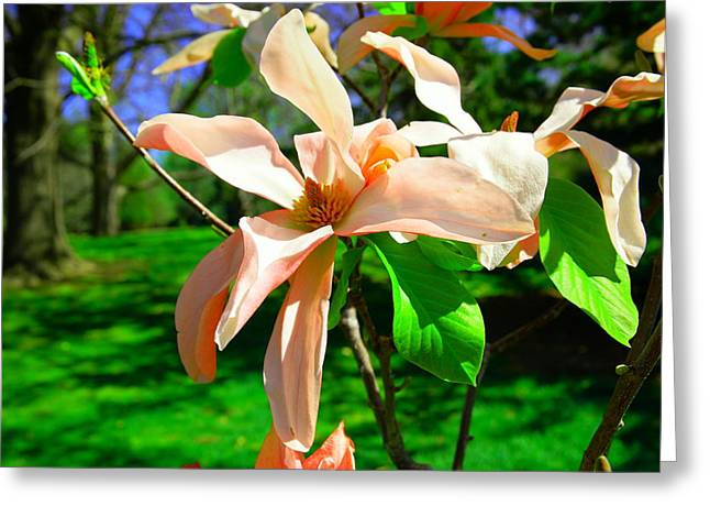 Greeting Card featuring the photograph Spring Blossom Open Wide by Jeff Swan