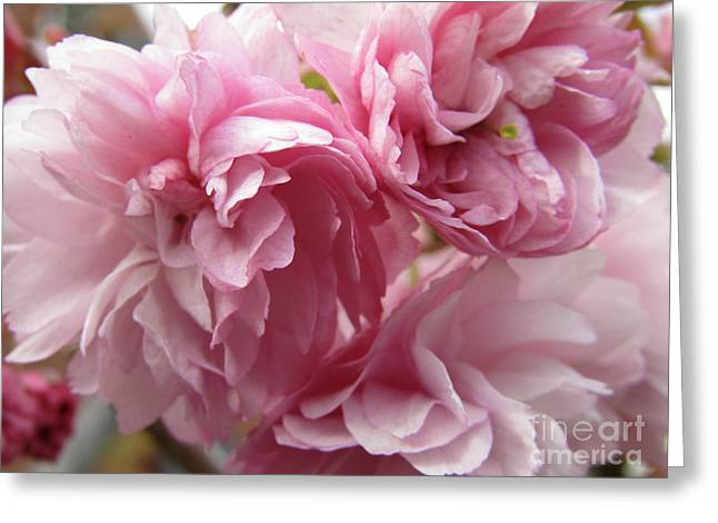 Spring Blossoms #1 Greeting Card