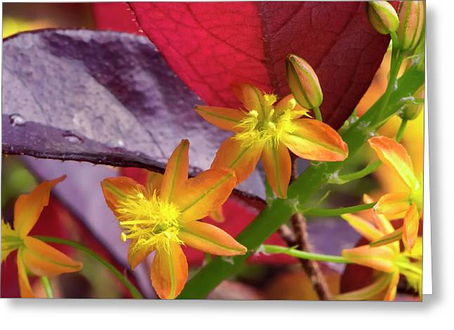 Greeting Card featuring the photograph Spring Blossoms 2 by Stephen Anderson