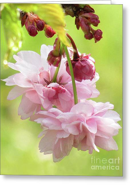 Spring Blossoms 8 Greeting Card