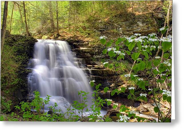 Spring Blossoms Grace Erie Falls Greeting Card by Gene Walls