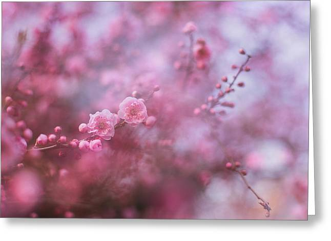 Spring Blossoms In Their Beauty Greeting Card