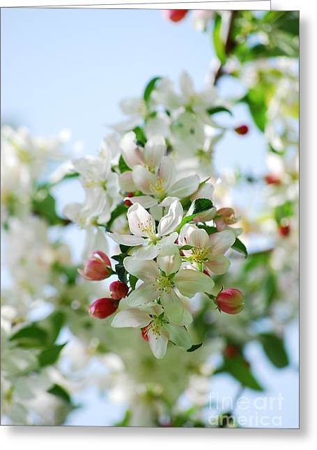 Greeting Card featuring the photograph Spring Blossoms  by Lila Fisher-Wenzel
