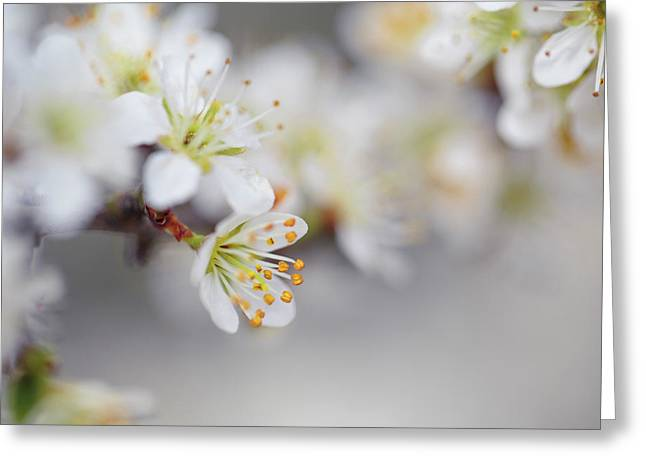 Spring Blossoms Greeting Card by Nailia Schwarz