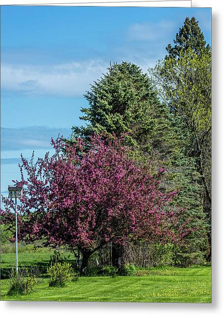 Greeting Card featuring the photograph Spring Blossoms by Paul Freidlund