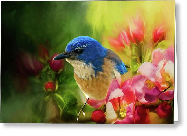 Spring Blue Jay Greeting Card