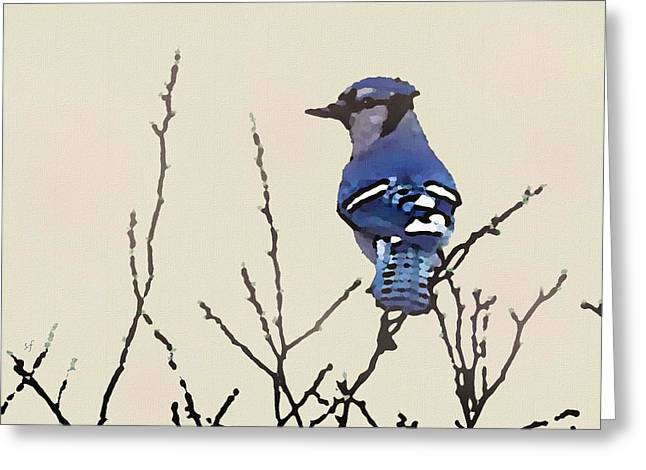 Spring Bluejay Greeting Card