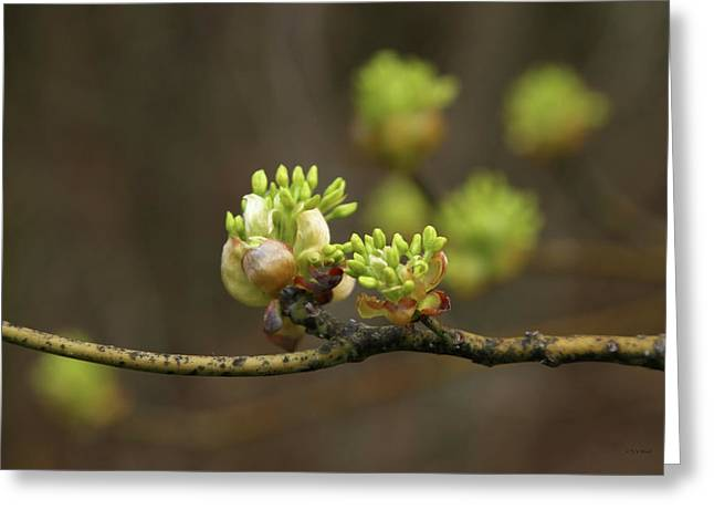 Spring Buds 9365 H_2 Greeting Card