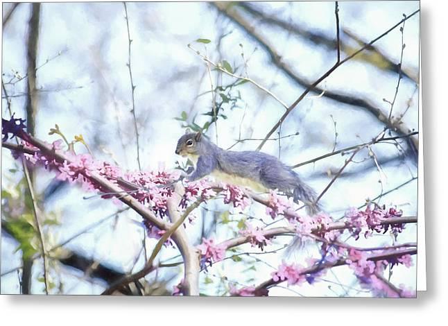 Spring Buds Greeting Card by Barbara Hymer