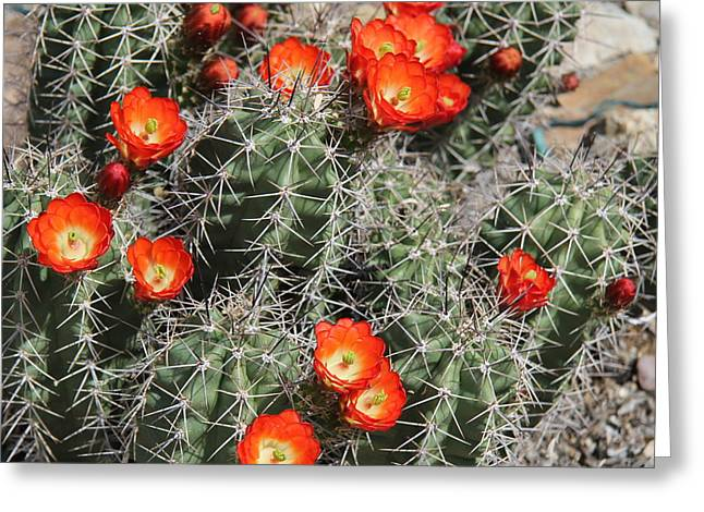 Spring Cactus Greeting Card by Kathy Bassett