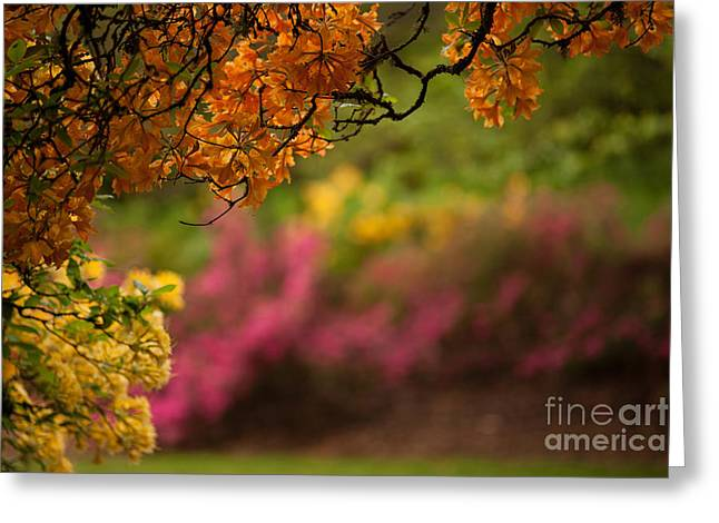 Spring Canopy Greeting Card by Mike Reid