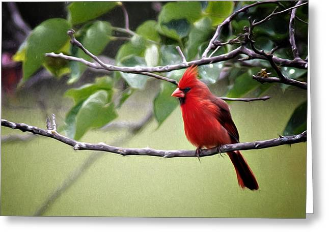 Greeting Card featuring the photograph Spring Cardinal by Lana Trussell