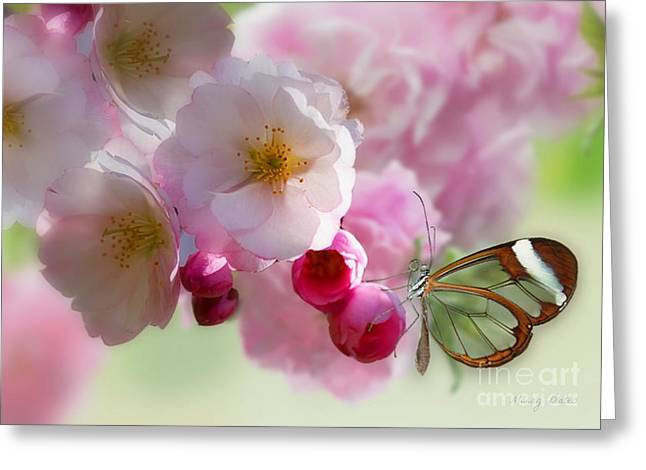 Spring Cherry Blossom Greeting Card by Morag Bates