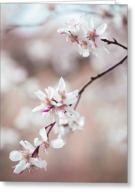 Spring Cherry Delight Greeting Card by Jenny Rainbow