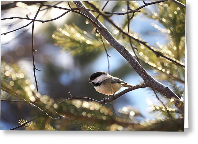Spring Chickadee Greeting Card by Angie Rea